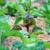 certified-organic-vegie-patch-gardening-melbourne.png