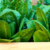 growing-organic-vegies-melbourne-victoria-the-healthy-patch.png