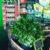 organic-herbs-shop-mansfield-vic.jpg
