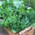 growing-organic-vegetable-gardens-perth-wa.jpg